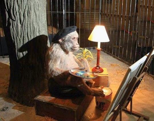 faze comice maimute (10)